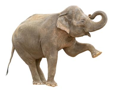 Asian elephant female greeting cutout